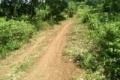 Cần Bán gấp rẫy cây ăn trái 1,4 ha cách quốc lộ 14 là 2km, xã Thọ Sơn, Huyện Bù Đăng, GIÁ 800 TRIỆU