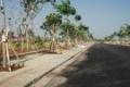 Đất nền đường Nguyễn Xiển Quận 9 giá siêu tốt