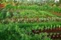 Cho thuê nhà đất nông nghiệp tại Huyện Hoài Nhơn, tỉnh Bình Định