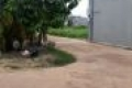 Bán đất 2 mặt tiền phường Phú Mỹ thành phố Thủ Dầu Một tỉnh Bình Dương
