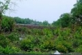 Chính chủ cần bán lô đất 11000m2 mặt tiền đường An Thới Đông giá 1.6tr/m2