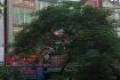 Cho thuê nhà mặt phố Trung Hòa – Cầu Giấy .Dt 140m, 6t, Mt 6m, Giá thuê triệu/tháng. Liên hệ 0972098794.