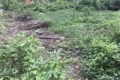 bán đất bình chánh 1.000m thổ vườn có 422m thổ cư sổ hồng riêng 5tr3/m
