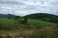 Bán đất rừng Ninh Tân, thích hợp trồng cây ăn trái, làm du lịch. LH 0935964828