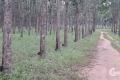 Bán vườn cao su 148 ha tại Lộc Ninh- Bình Phước