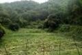 cần chuyền nhượng 12 ha đất trang trại tại huyện kỳ sơn tỉnh hòa  bình