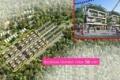 Sự kiện tham quan Flamingo Đại Lải Resort - Cơ hội đầu tư Shophouse với 1.4 tỷ, sổ đỏ VV, LN 13%