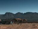 Video: Báo đua với xe công thức E: ai thắng?