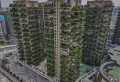 Người dân tháo chạy khỏi khu chung cư phủ kín cây xanh vì... muỗi