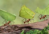 """Ngưng """"ảo tưởng"""" mình là rồng, là hổ... hãy làm việc chăm chỉ như kiến và sống tự do như những chú bướm"""