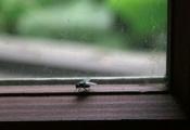 Chuyện con ruồi và ô cửa kính: Nỗ lực thôi là chưa đủ, đôi khi thành công cần tới sự thay đổi không ngờ
