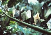 Hạn chế rủi ro cho chiến lược kinh doanh tiền tệ Carry Trade