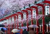 4 quan niệm của người Nhật Bản truyền cảm hứng cho cuộc sống thường ngày: Mọi thứ quá đẹp để lãng phí