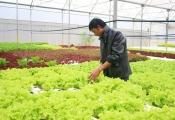 Ông chủ cơ khí thu tiền tỷ nhờ trồng rau công nghệ cao