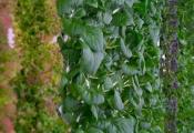 """Startup trồng cây trong nhà """"kiểu mới"""" nhận 200 triệu USD vốn đầu tư"""