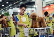 Dịch vụ chăm sóc thú cưng ở Trung Quốc kiếm hơn 20 tỷ USD một năm