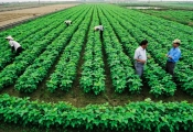 Đề xuất miễn thuế sử dụng đất nông nghiệp đến năm 2030