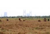 TP.HCM: Nộp thuế đất mới khi chuyển từ đất trồng lúa sang mục đích khác