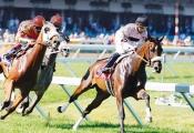Bắc Ninh: Tập đoàn Hàn Quốc muốn xây trường đua ngựa 500 triệu USD