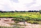 Xót xa nhìn tiền tỷ chôn vùi với đất hoang