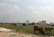 Dân Sài Gòn từng ngày chờ thoát nạn quy hoạch treo