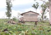 Có được xây dựng lán trại trên đất giao khoán?