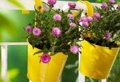 Ngoại thất xinh lung linh với chậu hoa độc đáo