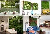 Căn nhà thêm sức sống với bức tường rêu xanh mướt