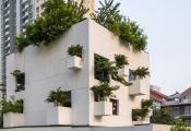 Mãn nhãn với ngôi nhà đầy thiên nhiên và nắng ở Sài Gòn trên báo Mỹ