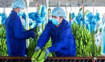 Bầu Đức dự tính thu 3.700 tỷ đồng từ vườn chuối