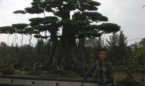 Những đại gia 'oằn mình' cùng cây cảnh
