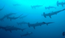 """5 lời khuyên để """"bơi cùng cá mập"""""""