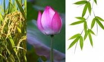 """Chọn """"quốc hoa"""": Từ góc nhìn marketing"""