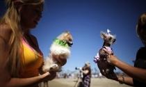 Nghề chải lông chó doanh thu 2 tỷ USD