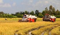 Ngân hàng 'săn' nông dân: Tiền nhiều không là tất cả