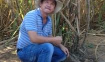 Đại gia bất động sản lánh nạn bằng trồng mía, nuôi thủy sản