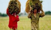 Đại gia chứng khoán, bất động sản đua đầu tư cho nông nghiệp