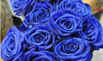 Hoa hồng xanh tiền triệu cho ngày Valentine