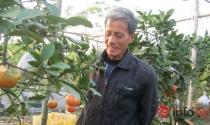 Độc đáo vườn cây 9 loại quả bạc tỷ của lão nông Hà Nội