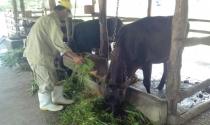 Từ câu chuyện con bò sữa