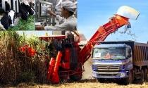 Khi đại gia làm nông dân