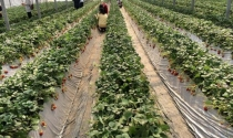 Cách làm nông nghiệp gắn với du lịch của người Nhật