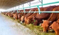 Bầu Đức đặt cược vào canh bạc chứng khoán hóa nông nghiệp
