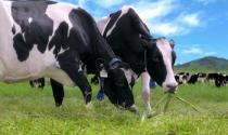 """Ngành sữa Việt sẽ """"chìm"""" trong TPP nếu không minh bạch tiêu chuẩn?"""