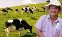 Bỏ BĐS, HAGL kiếm được nghìn tỷ nhờ nuôi bò