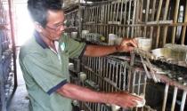 Sống khỏe nhờ nuôi bồ câu