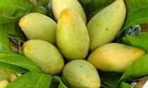 Mỹ xúc tiến cho phép nhập khẩu xoài tươi và vú sữa của Việt Nam