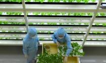 Vốn Singapore đổ vào nông nghiệp và thực phẩm
