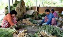 Thu hàng trăm triệu đồng nhờ trồng sả chuyên canh