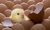"""Triết lý kinh doanh """"hãy chăm sóc những con gà mái"""" - và bí quyết """"khiến cho nhân viên cảm thấy hạnh phúc"""""""